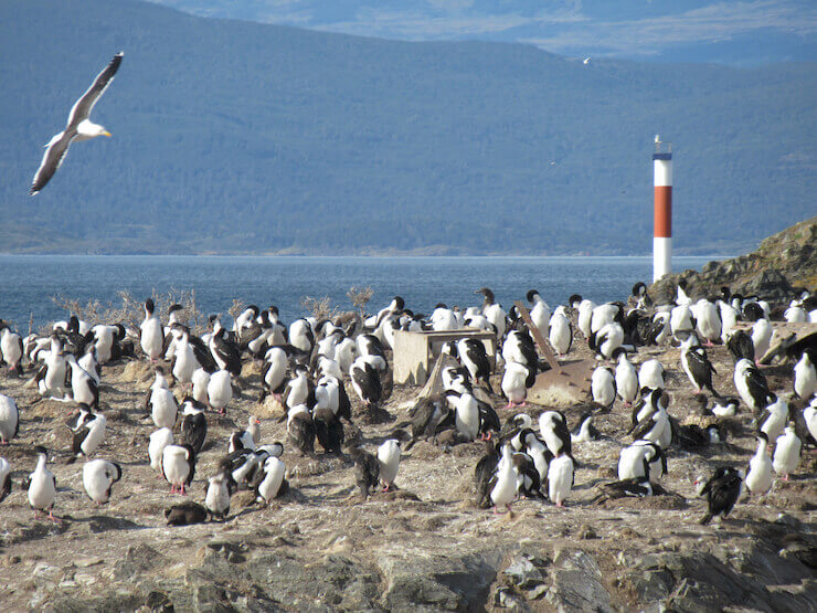 Canal de Beagle Ushuaia