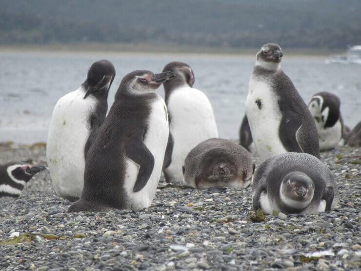 Tour Pinguinera