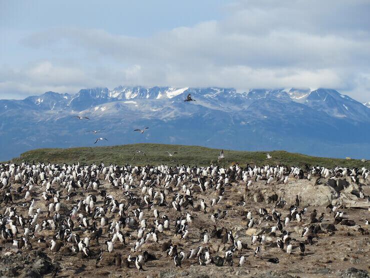Tour Canal de Beagle e Pinguinera